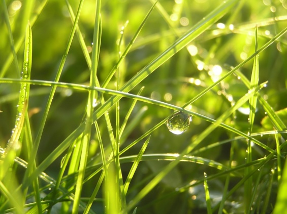 morning_dew_drop-1400x1050