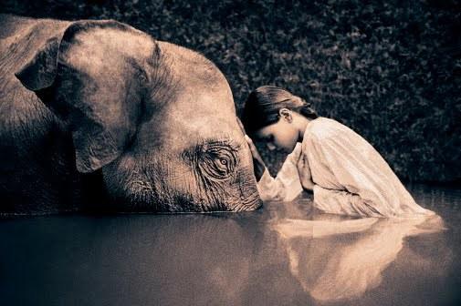 gregorycolbertgirlinwaterw_elephant1